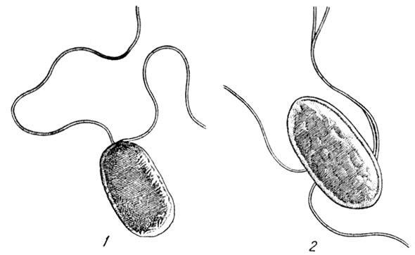И диагностика болезней растений