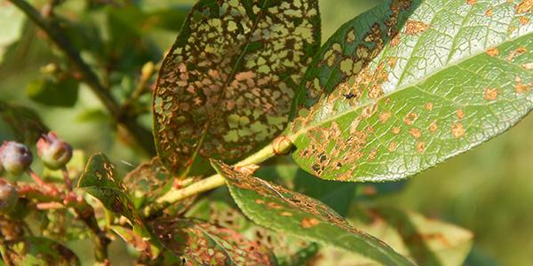 Методы и способы борьбы с вредителями и болезнями растений