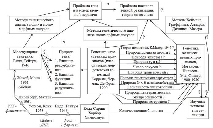 Схема эволюции трех ветвей