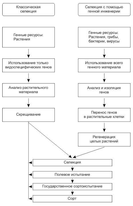 Схема классической селекции и